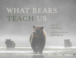 What Bears Teach Us by Sarah Elmeligi
